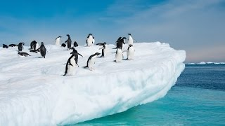 Under the Antarctica: A year on Ice - Best Documentaries
