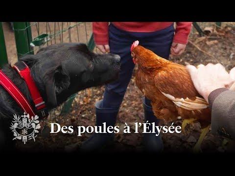 Des poules à l'Élysée   Emmanuel Macron