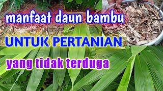 Download lagu Manfaat Daun Bambu Untuk Pertanian Yang Tidak Terduga