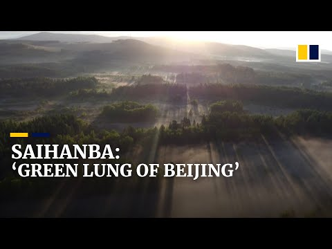 China transforms barren Saihanba into one of the world's largest man-made forests