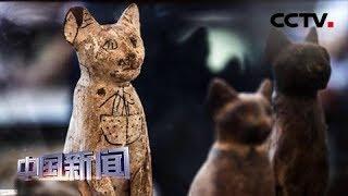 [中国新闻] 埃及发现数十具距今约2700年的动物木乃伊 | CCTV中文国际