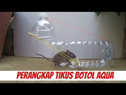 The Mouse/Rat Trap Cara Membuat Perangkap Tikus Botol Aqua Paling Sederhana- Jebakan Tikus