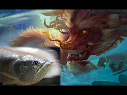 The Legendary Dragon Fish | Feng Shui Story Of Asian Arowana