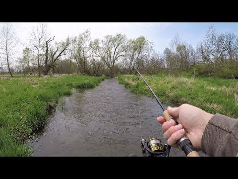 Tiny CREEK Fishing For TROUT (brook, Rainbow & Brown)