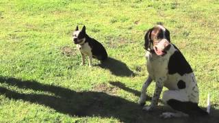 C.o.r.e. Dog Training & Boarding Video - Los Angeles, Ca