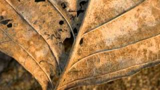 A. Schnittke - Five Aphorisms - Borislava Taneva - piano