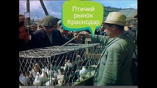 Птичий рынок Краснодар 01.04.2018г.(Ярмарка голубей,животных)в 4к