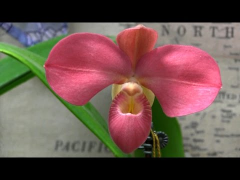 Orchid Society of Greater St. Louis Show & Sale • February 2016