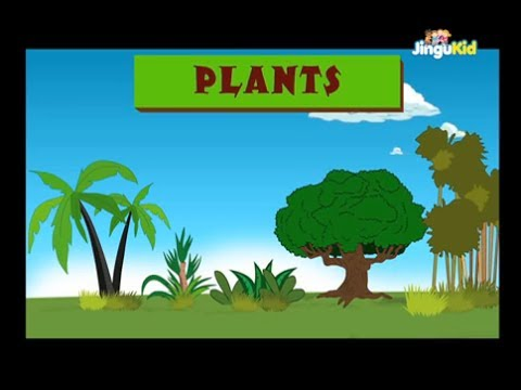 Learn about Plants | Easy Learning for Children | Nursery ...