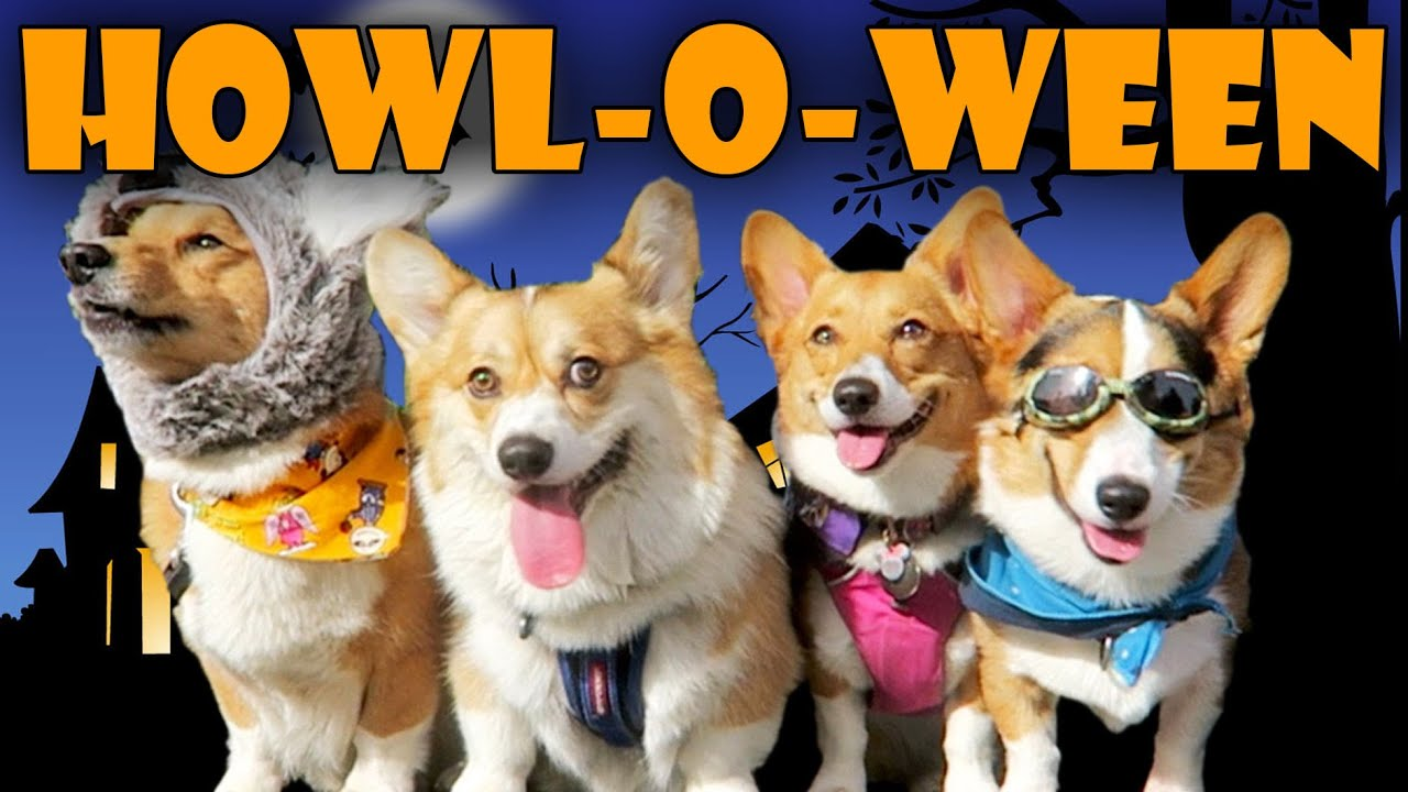 halloween dog costume party for corgis life after college ep 447