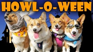 HALLOWEEN DOG COSTUME PARTY for CORGIS - Life After College: Ep. 447