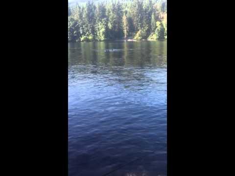 Trout Fishing At Merwin Lake, WA.