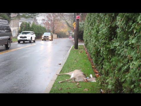 Cops drag dead deer to Staten Island property