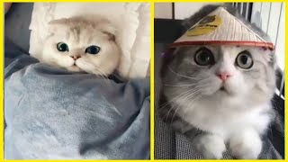 Funny Cats compilation Video 2 | cat wala video