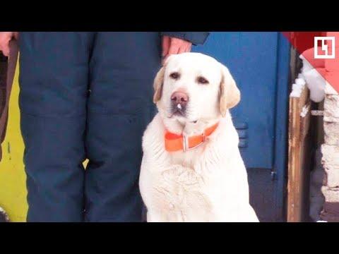 Собака, которая спасла Ваню Фокина из-под завалов