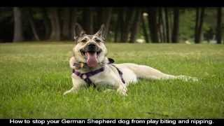 German Shepherd Training Supplies Video