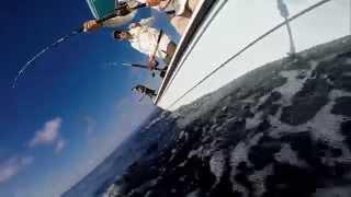 Mahi Mahi Fishing Bahamas