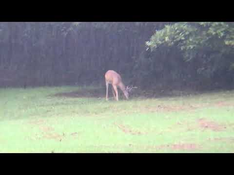 Deer scouting in the rain- Big A Outdoors