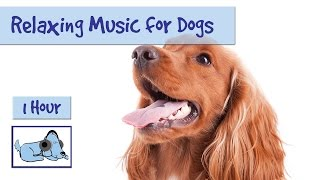 1 Hour of Relaxation Music for Dogs and Puppies