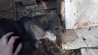 щенки в добрые руки в Казани