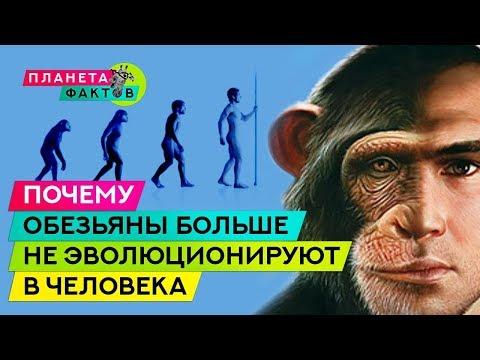 Вопрос: Почему в наше время обезьяны не превращаются в людей?