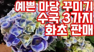 야생화 화초 노지월동식물 베란다화초 플랜테리어식물 인테…