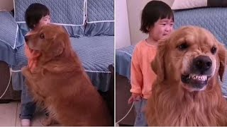 Dog Protects Little Girl From Being Scolded by Her Mother