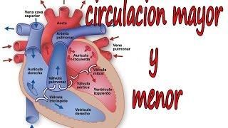 Circulación pulmonar función de sistémica la