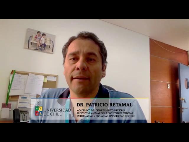 #ENUNMINUTO: Dr. Patricio Retamal comenta sobre tigre que dio positivo a coronavirus en Nueva York