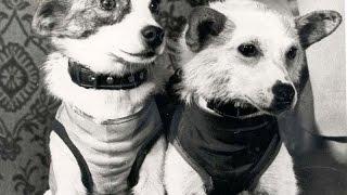 Собаки-космонавты Белка и Стрелка и  другие новости 3 выпуск