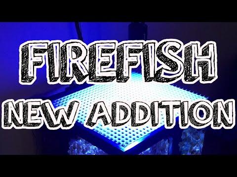 FIREFISH - New Addition