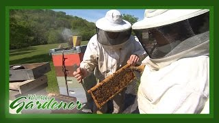 Williams Honey Farm | Volunteer Gardener