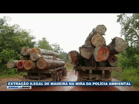SP: Polícia Apreende 30 Toneladas De Madeira Irregular