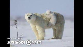 Милые медвежата -FAP