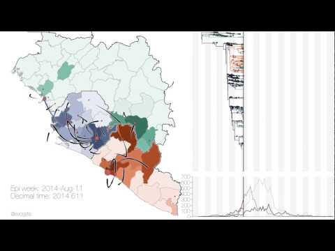 Virus genomes reveal factors that spread and sustained the Ebola epidemic