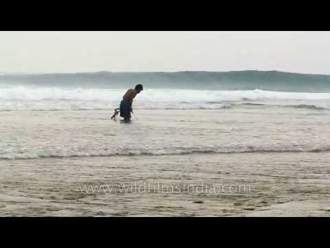 Spot and shoot: Crab catcher in Andamans