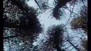 Play In Dark Trees