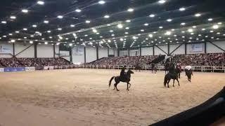 Иппосфера 2019. Кабардинская порода лошадей.