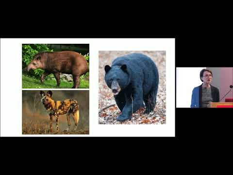 Wild Diagnosis: Human Health and the Animal Kingdom on YouTube