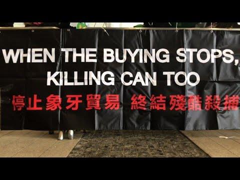 Hong Kong bans ivory sales in landmark vote