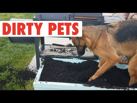 Dirty Pets | Funny Pet Compilation 2018