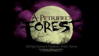 Return to the Forest - A Petrified Forest - 2014