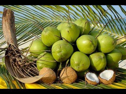 Coconut Vender - Vietnam Lifestyle