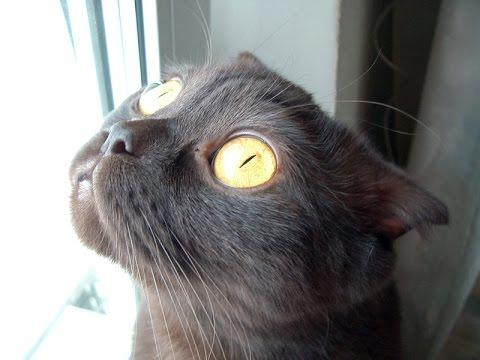 бешеный кот картинки
