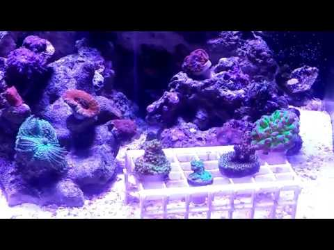 Nano Cube Update Week 28, Plus Vivid Creations Aquatics RFG and Micro Bubbles