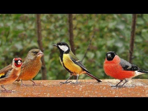 Videos for Cats to Watch : Garden Birds in The Gentle Rain
