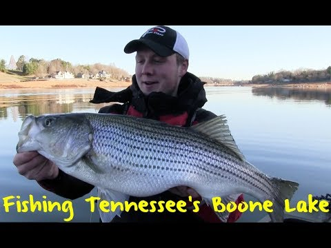 Fishing East Tennessee's Boone Lake For Stripers And Brown Trout