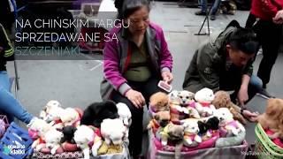 Szczeniaki sprzedawane w Chinach jak pluszowe zabawki 😢