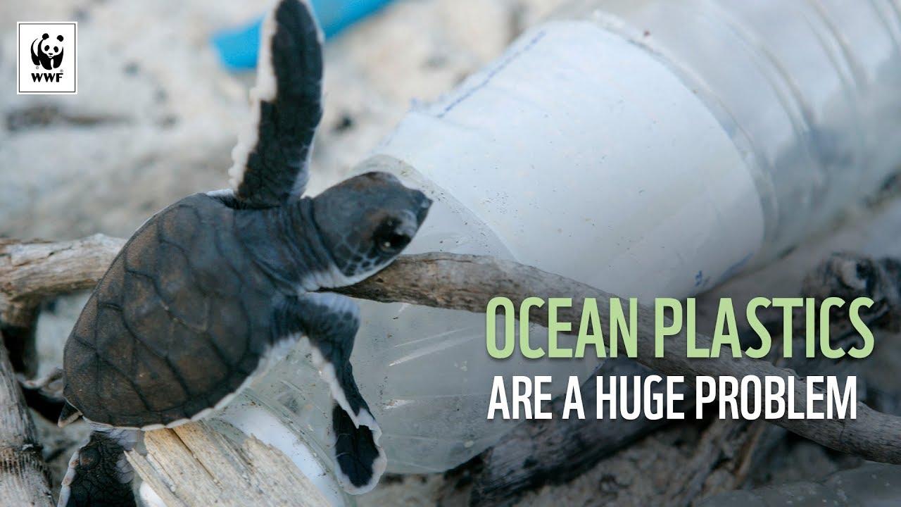Ocean Plastics Are A Huge Problem | WWF-Australia