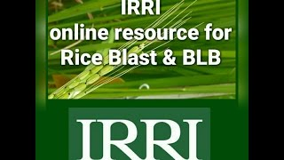IRRI- online resource for rice Blast and Bacterial leaf blight